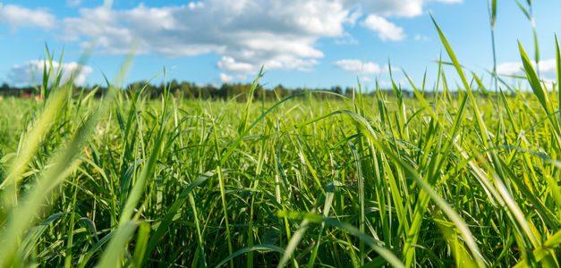 >Grassland